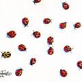 Ladybugs by Glenn Farrell