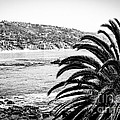 Laguna Beach California In Black And White by Paul Velgos