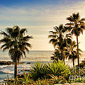Laguna Beach by Mariola Bitner