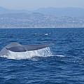 Laguna Whale by Craig David Morrison