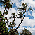 Lahaina Palms by Paulette B Wright