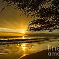 Lahaina Sun Burst by Jamie Pham