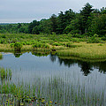 Lake And Bog by Paul Yoder