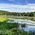 Lake At Acadia National Park by Max Chernyshov