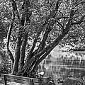 Lake Bench In Black And White by Kate Brown