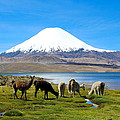 Lake Chungara Chilean Andes by Kurt Van Wagner