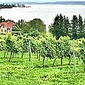 Lake Constance by Gordon Elwell