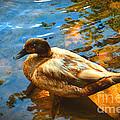 Lake Duck Vignette by Stacie Siemsen