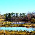 Lake Helen Lee by Darrell Clakley