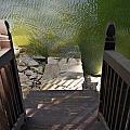 Lake House by Sharon Popek