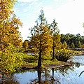 Lake Howard - Fall Color In The Park by RJ Powell Studios