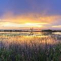 Lake Jackson Sebring Florida Panorama by Debra and Dave Vanderlaan