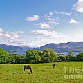 Lake Killarney From Aghadoe Hill County Kerry by Alex Cassels