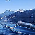 Lake Lucerne Seagulls by Rowan Russell