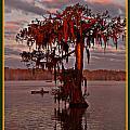 Lake Martin Louisiana by Kimo Fernandez