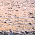 Lake Michigan Sunset With Birds by Sylvia Herrington