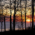 Lake Michigan Sunset With Silhouetted Trees by Mary Lee Dereske