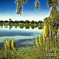 Lake Mindon Campground California by Bob and Nadine Johnston