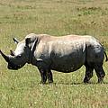 Lake Nakuru White Rhino by Aidan Moran