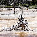Lake Of Death In Yellowstone by Brenda Kean