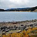 Lake On The Grand Mesa Colorado by Janice Pariza