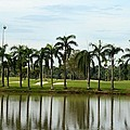 Lake Sand Traps Palm Trees And Golf Course Singapore by Imran Ahmed