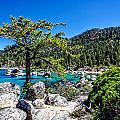 Lake Tahoe Bonsai Tree by Scott McGuire