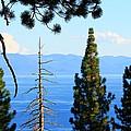 Lake Tahoe Tranquil by Saya Studios