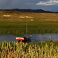 Lake Titicaca And Quinoa Field by James Brunker