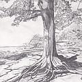Lake Tree by Nancy Beckerdite