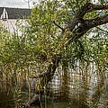 Lake Tree by Pati Photography