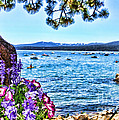 Lake View On Lake Tahoe By Diana Sainz by Diana Raquel Sainz