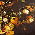 Lake Washington Lily Pad 14 by Thu Nguyen