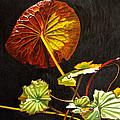 Lake Washington Lily Pad 18 by Thu Nguyen