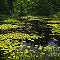Lake With Lily Pads by Elena Elisseeva