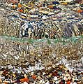 Lakeshore Rocks 2 by Lydia Holly