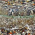 Lakeshore Rocks by Lydia Holly