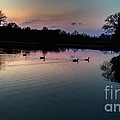 Lakeside Sunset Reflections by Peggy Franz