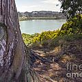 Lakeside Tree by Kate Brown