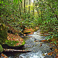 Lamance Creek  by Duane McCullough