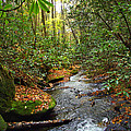 Lamance Creek Vertical by Duane McCullough