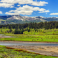 Lamar Valley by Greg Norrell