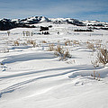 Lamar Valley Winter Scenic by Jack Bell
