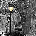 Lamp Lite by Tom Gari Gallery-Three-Photography