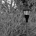 Lamp Post by Keith Swango