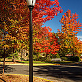 Lamp Post On The Corner by James Eddy