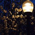 Lamplight 1 by Alys Caviness-Gober