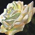 Summer Rose  by Anees Peterman