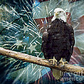 Land Of The Free by Terry Weaver