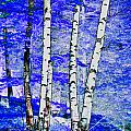 Land Of The Silver Birch by Kim Peto